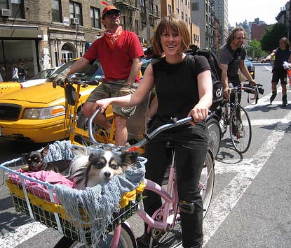 Dogs enjoy lanes on Doggie Pedal Parade - photo by Barbara Ross