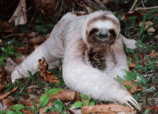 We are an action group.  This is the only kind of sloth we like.