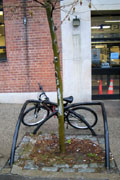 Bike Rack/Tree Guard: X-style at Peck Slip. Photo by Jym Dyer.